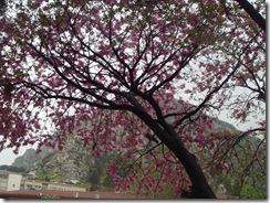 2011.04.29 amasya 032