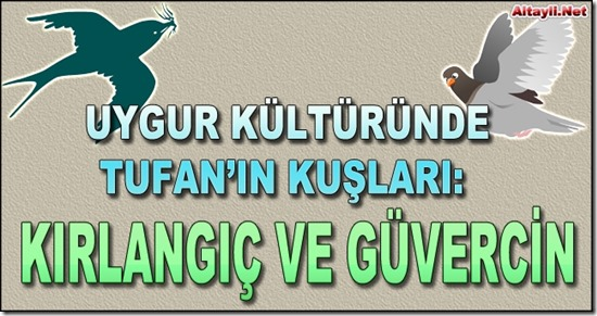 Kirlangic_Guvercin