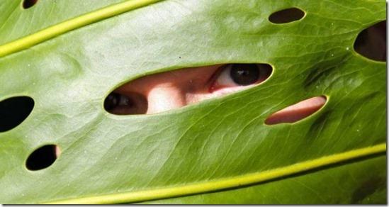 bitkilerin-gizli-yasami
