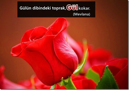 GÜL-768x535